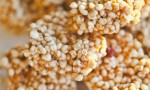 Puffed Millet Squares