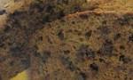 Chocolate-Cinnamon Zucchini Bread
